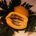 Carica_papaya