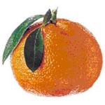 Citrus_reticulata