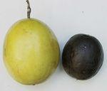Passiflora_edulis