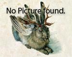 Rhinocladiella_mackenziei_dH24460
