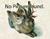 Nakazawaea_wickerhamii_NRRL_Y_2563